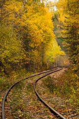 forest, autumn, turn, railway