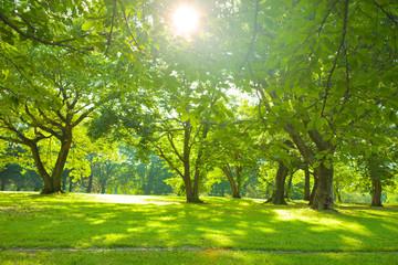 morning forest sunlight