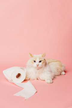 pink background portrait of a cat