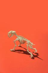 Animal skeleton.