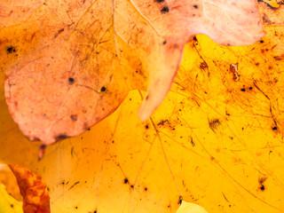 Fall Autumn Season Foliage Beautiful Colors