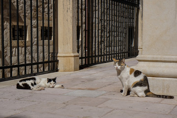 Two adorable stray cats relaxing on the streets of the old town in Dubrovnik, Croatia.