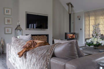 Beautiful dog relaxing over the back of a settee near to a log burning fire.