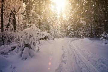 ski path in the winter wood