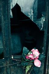 Cloth Rose & Broken Window