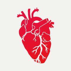 Anatomical human heart - red silhouette isolated on white background. Hand drawn sketch. Vector illustration.