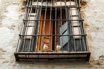 Couple of pigeons sittig on a window sill