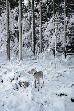A dog in winter forest in the morning