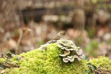 fotos de aves varias