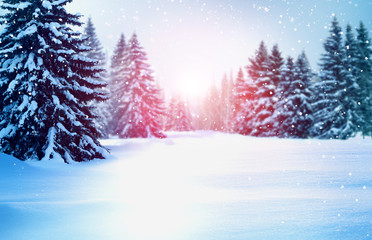 Wall Mural - Beautiful winter landscape with snow covered trees.Christmas background