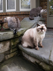 Fat Cat with his Cat Family