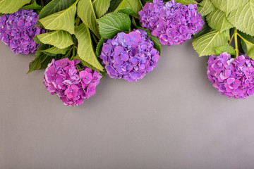 Fresh purple hydrangeas on gray background. Free space for text. Top view. Copy space
