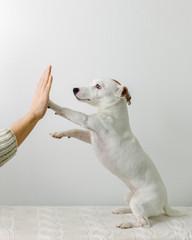 Cute high-fiving dog
