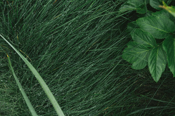 drops of dew on green grass, macro