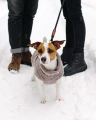 Cute dog in sweater