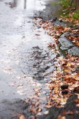 Pavement Under Rain