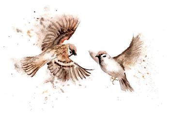 Watercolor drawings of birds. A pair of soaring sparrows Fototapete