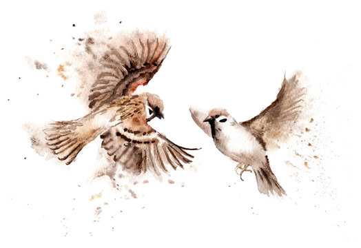 Watercolor drawings of birds. A pair of soaring sparrows