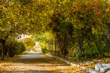 Alley with maple trees in a city park on autumn