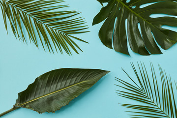composition of palm leaves on a blue texture