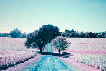 Farm road and tree infrared