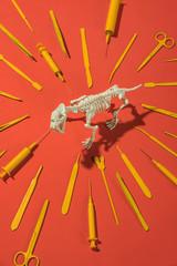 animal skeleton with surgery tools around it.