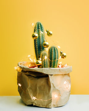 Cactus decorated with gold baubles