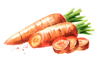 Fototapeta Fresh carrot with cut pieces. Watercolor hand drawn illustration  isolated on white background obraz