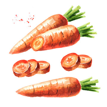 Carrot with cut pieces set. Watercolor hand drawn illustration,  isolated on white background