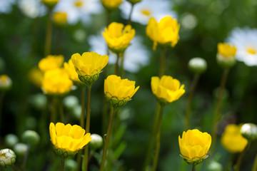 黄色い花の庭