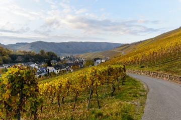 Romantische Herbststimmung in den Weinbergen von Neumagen-Dhron an der Mosel