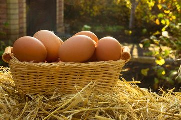 Chicken eggs on basket