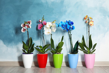 Tuinposter Orchidee Beautiful tropical orchid flowers in pots on floor near color wall
