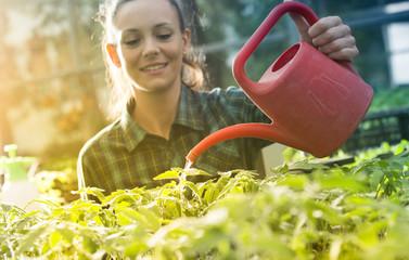 Woman watering seedlings in greenhouse