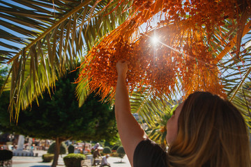 Woman tourist holding raw dates on date palm