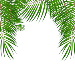 Frame with Palm Leaf Vector Background Isolated Illustration