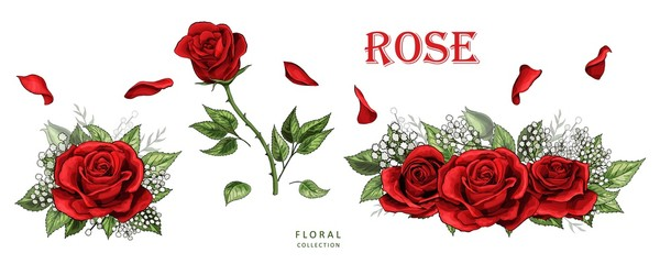 Red roses hand drawn color set. Rose flowers isolated on white background