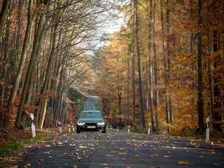Landstrasse im Herbst - Blätter auf Fahrbahn