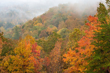Fog lies around a valley of yellow leaves and green Rhododendron bushes in the Smoky Mountains.