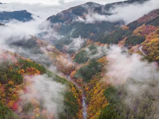 紅葉と霧 Sea of clouds and autumn colors of Japan