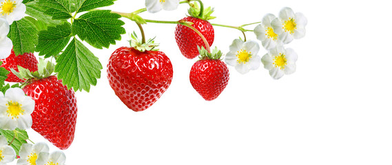 tasty red strawberries on white background