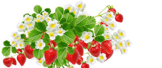 tasty fresh strawberries isolated on white