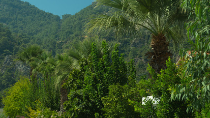 Palms and trees with mountain backdrop
