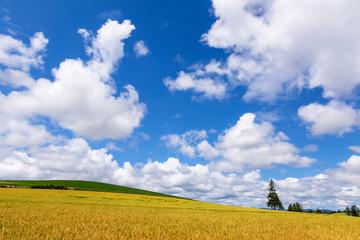北海道 夏の新栄の丘