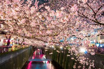 ライトアップに映える夜桜
