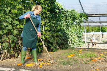 Woman gardener working near seedlings  and using  rake in  hothouse