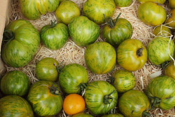 Green bright tomatoes