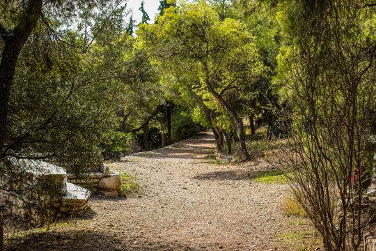 soft focus empty trail in park suburb nature environment