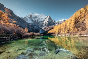 Xiannairi mountain reflection on emerald lake with golden pine forest in autumn Wall mural