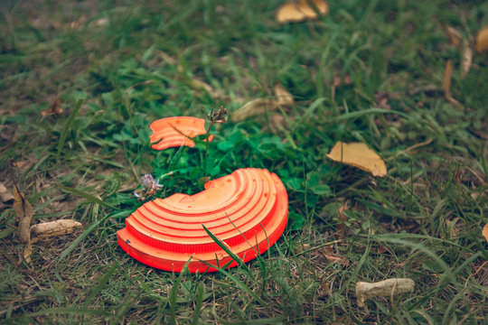 broken orange flying plate lying on the grass